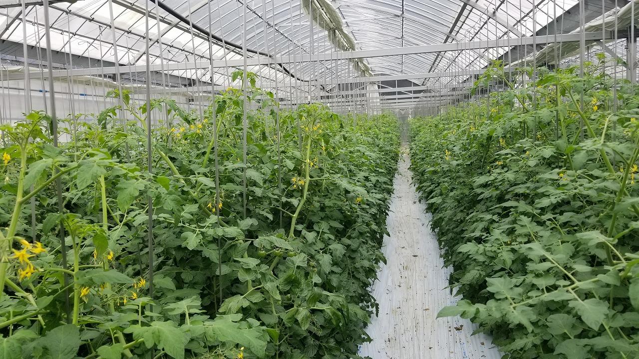 写真:まるたか農園のこだわり