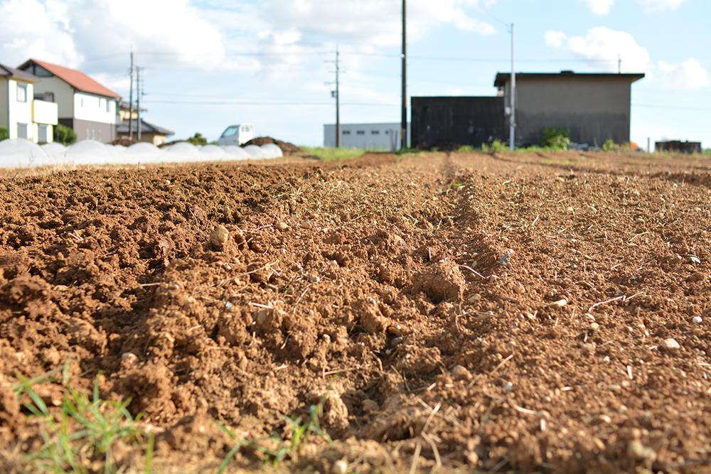 写真:加藤農園のこだわり