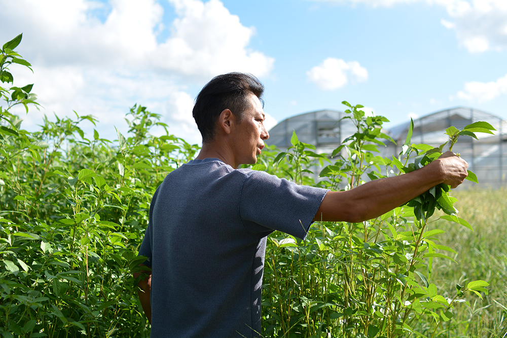 写真:加藤農園